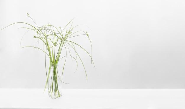 Zielona trawa kwiaty w trawie butelkowej z miejscem na kopię na białym tle