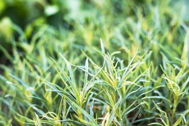 Zielona trawa. letni lub wiosenny poranek. poziomy obraz z rozmytym tłem. motyw przyrody.