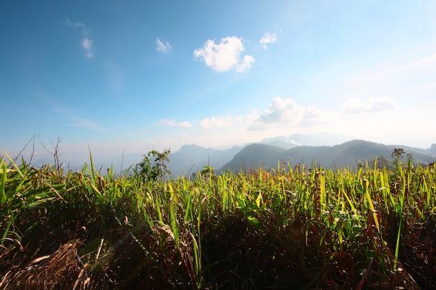 Zielona trawa na górskiej dolinie z niebieskim słonecznym niebie