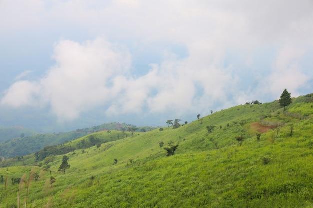 Zielona trawa na górze natura w porze deszczowej
