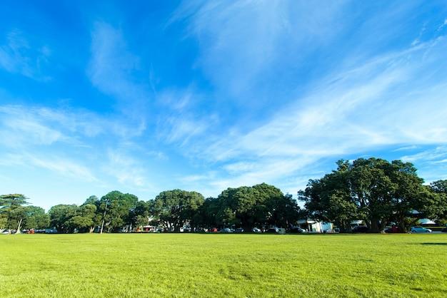 Zielona trawa na polu golfowym