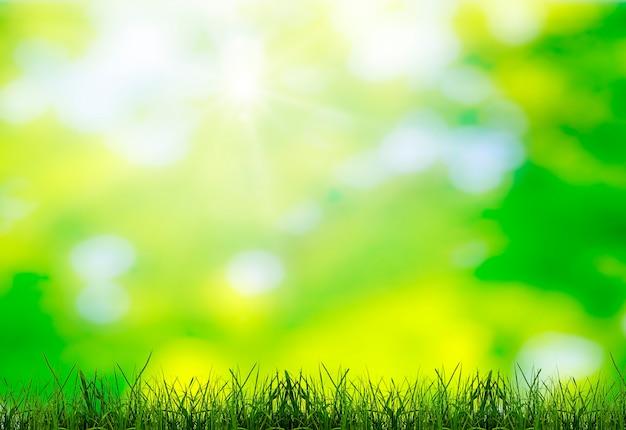 Zielona trawa na zieleni