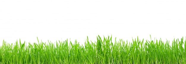 Zielona trawa odizolowywająca na bielu