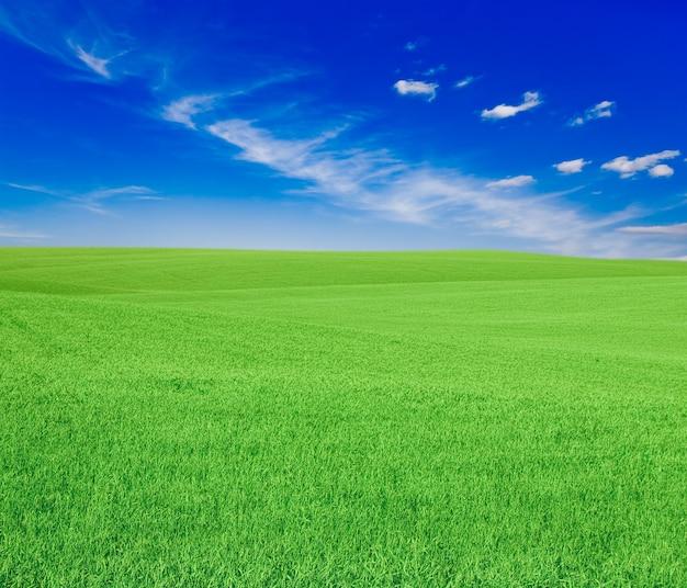 Zielona trawa pod błękitnym niebem