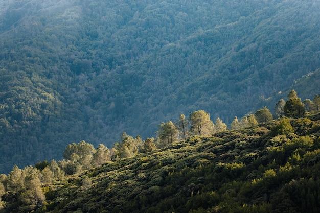 Zielona trawa pokryta górą w ciągu dnia