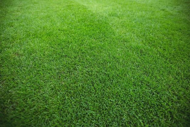 Zielona trawa pole tła