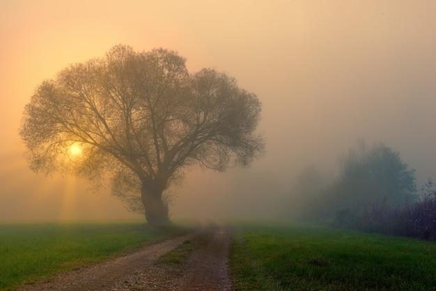 Zielona trawa pole z drzewami i mgłą