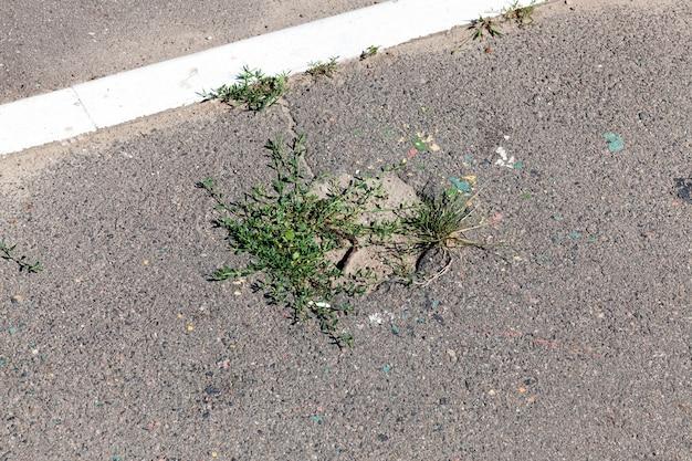 Zielona trawa przebijająca się i rosnąca w dołach na asfaltowej drodze