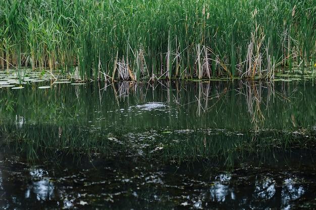 Zielona trawa rośnie w pobliżu jeziora