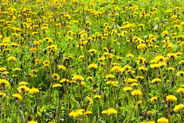 Zielona trawa rośnie w polu rolnym