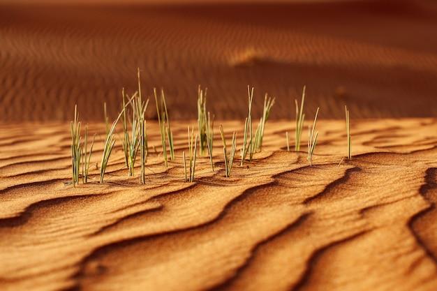 Zielona trawa rośnie z piasku na pustyni