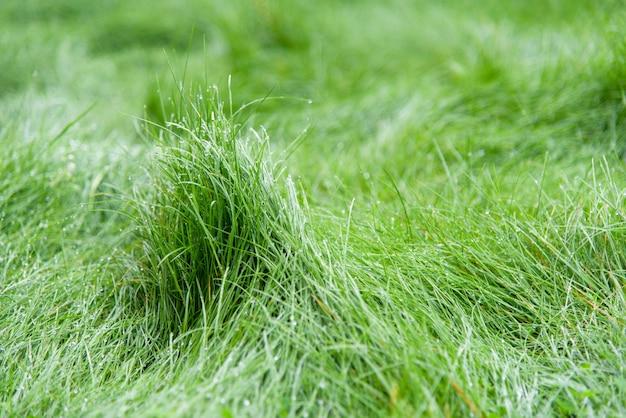 Zielona trawa rozmazane tło