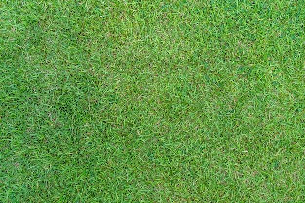 Zielona trawa tekstura dla tła. zielony trawnik wzór i tekstura tło. zbliżenie.