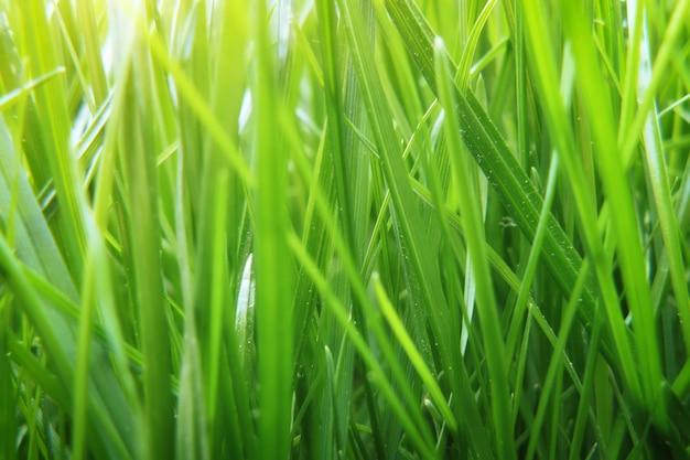 Zielona trawa tekstura. element projektu.