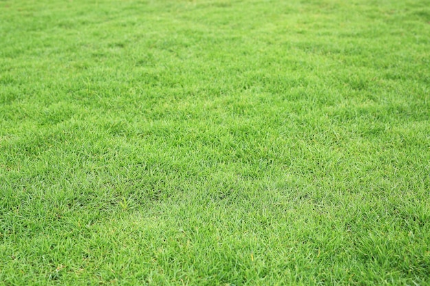 Zielona trawa tekstura jako tło