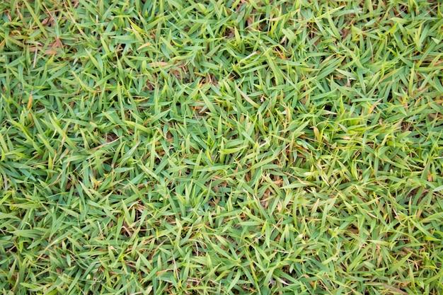Zielona trawa tekstura tło naturalne