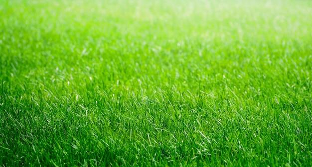 Zielona trawa tekstura tło. pole trawy.