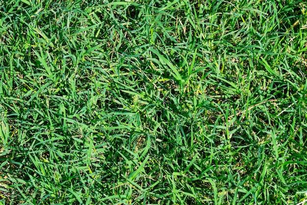 Zielona trawa tekstura tło widok z góry