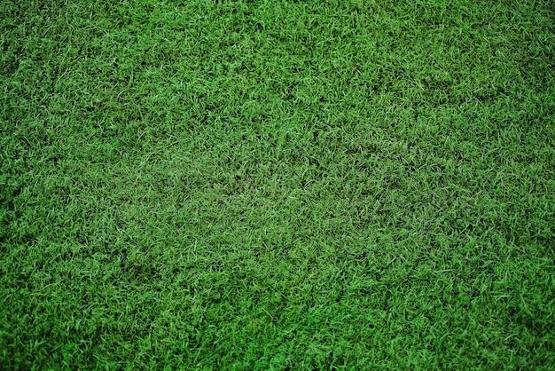 Zielona trawa tekstura tło, widok z góry