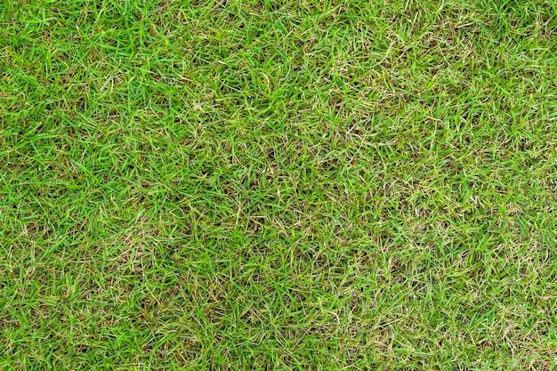 Zielona trawa tekstura. zielony trawnik stoczni tekstura tło. zbliżenie.