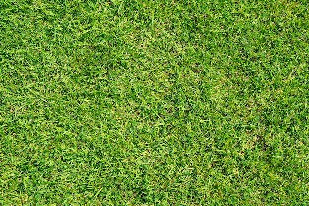Zielona trawa tekstura