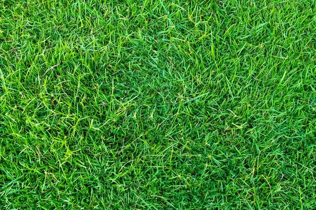 Zielona trawa tekstury na tle. zielony trawnik wzór i tekstura tło. zbliżenie.