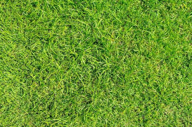 Zielona trawa tekstury tła. zielony trawnik wzór i tekstura tło. zbliżenie.