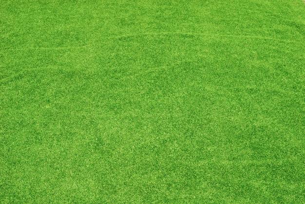 Zielona trawa tekstury