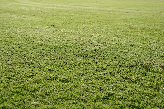 Zielona trawa tle