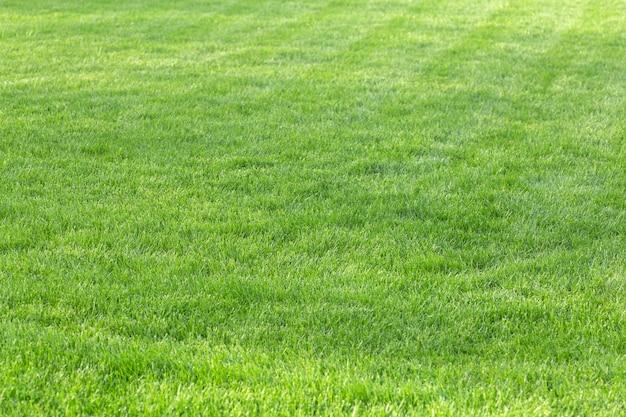Zielona trawa tło młody trawnik latem pod słońcem na polu w publicznym parku wysokiej jakości zdjęcie