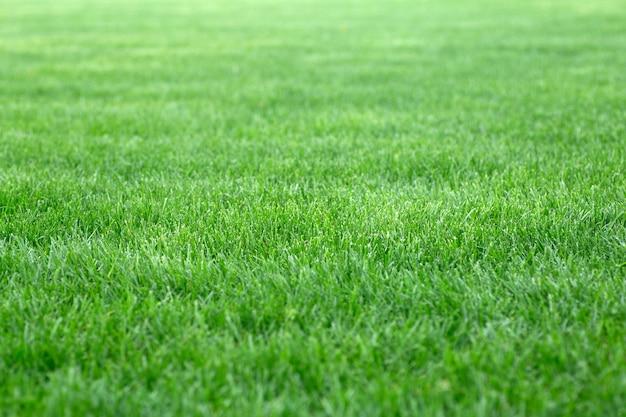 Zielona trawa tło. młody trawnik latem pod słońcem na polu w publicznym parku. zdjęcie wysokiej jakości