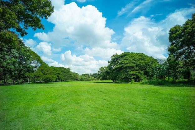 Zielona trawa tło pola