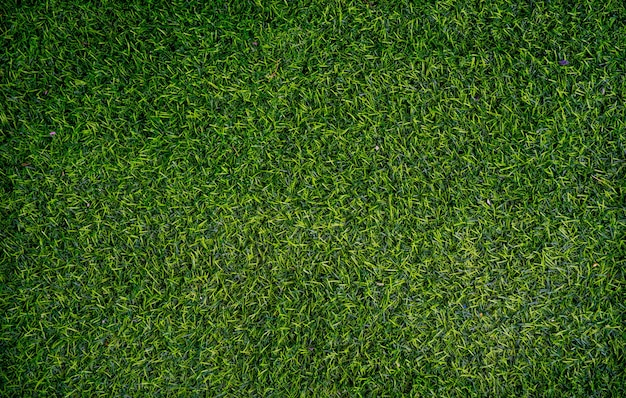 Zielona trawa tło
