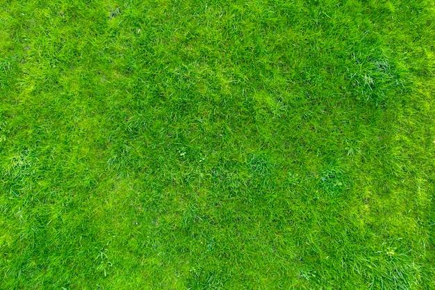 Zielona Trawa W Ogrodzie. Wspaniałe Letnie Tło. Premium Zdjęcia