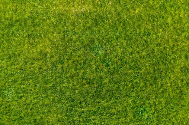 Zielona trawa w ogrodzie. wspaniałe letnie tło.