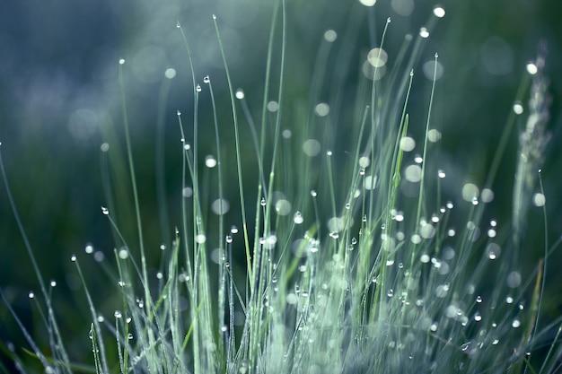 Zielona trawa w rosie na powierzchni porannego słońca