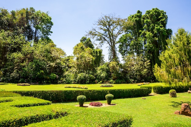 Zielona trawa w tropikalnym parku na sri lance. natura cejlonu
