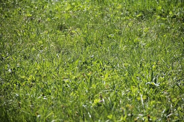 Zielona trawa z bliska tekstury