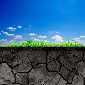 Zielona trawa z glebą na białym tle na tle nieba