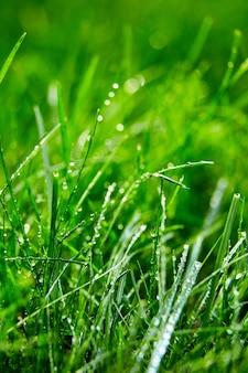 Zielona trawa z kroplami wody na liściach