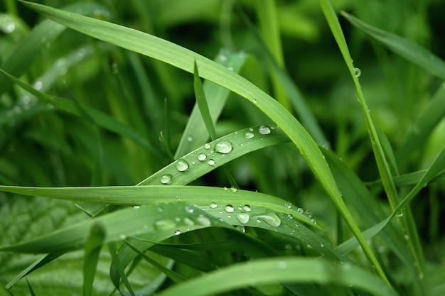 Zielona trawa z kroplami wody. po deszczu