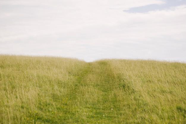 Zielona trawa z niebem