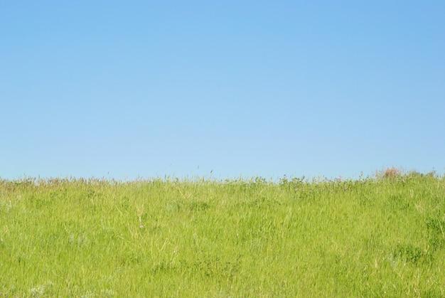 Zielona trawa z niebieskim niebem i chmurami.
