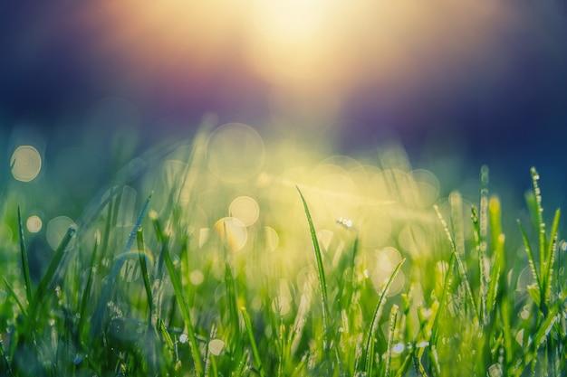 Zielona trawa z rosą