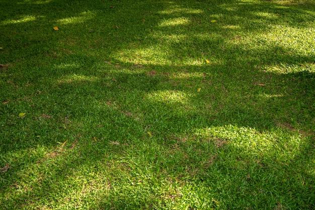 Zielona trawa z wiązką światła słonecznego.