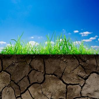 Zielona trawa zw glebie na białym tle na tle nieba