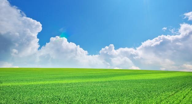 Zielona wiosenna łąka i błękitne niebo