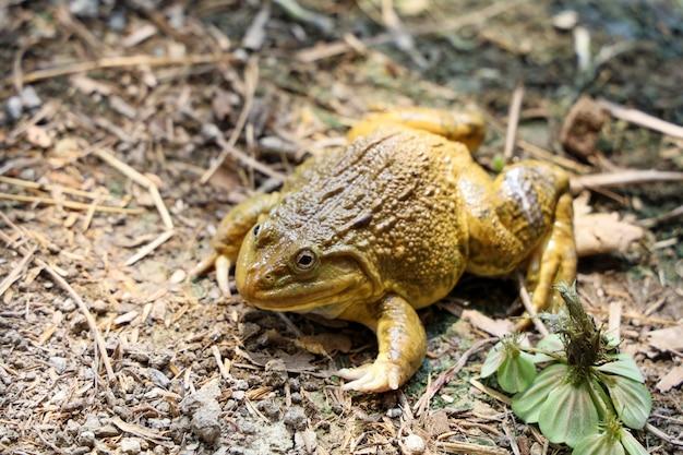 Zielona żaba na podłodze