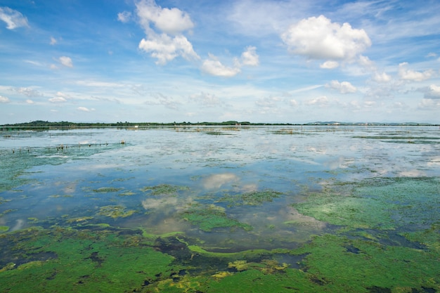 Zielone algi w jeziorze z błękitnego nieba