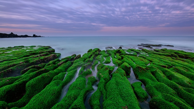 Zielone algi